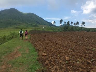 Camote farm